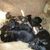 Помощь животным Челябинска обрести свой дом