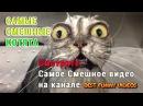 Самые смешные котята 2015. Смешное Видео про котов, кошек и котят 2015. Приколы с живо
