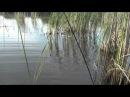 Pescuit sportiv la balta Gliganu de Sus