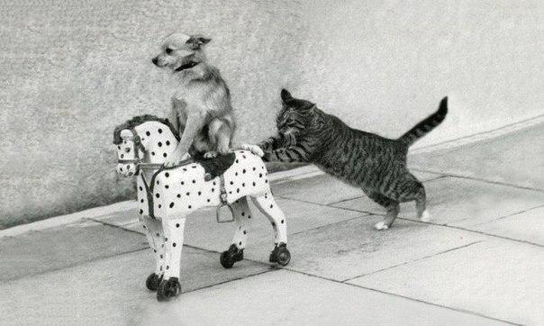 "Катись к хуям!Тут только кошки! | Кафе ""The Cats"" | ВКонтакте"