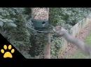 Squirrels Spinning on Bird Feeders Compilation