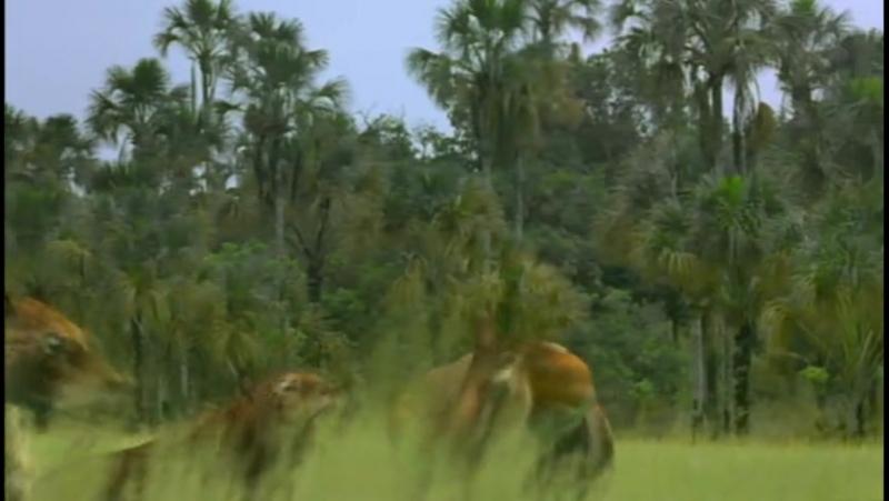 Прогулки с чудовищами BBC Walking with Beasts 5 Серия 2003 BDRip Feokino