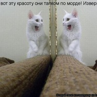 Марина Медвежонок