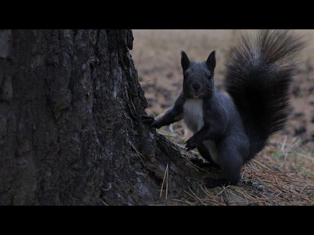 Белки в осеннем лесу Canon 70D Tamron 17 50mm F2 8