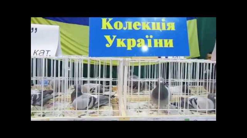 Expozitia Nationala Columbofila din Ukraina Всеукраїнська Виставка голубів м Львів 2016