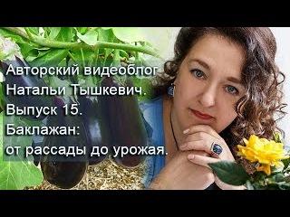 Авторский видеоблог Натальи Тышкевич. Выпуск 15. Баклажан: от рассады до урожая.