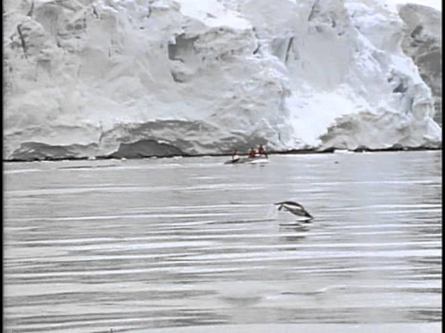 28 Одиссея Жака Кусто Команда Кусто Полет пингвина
