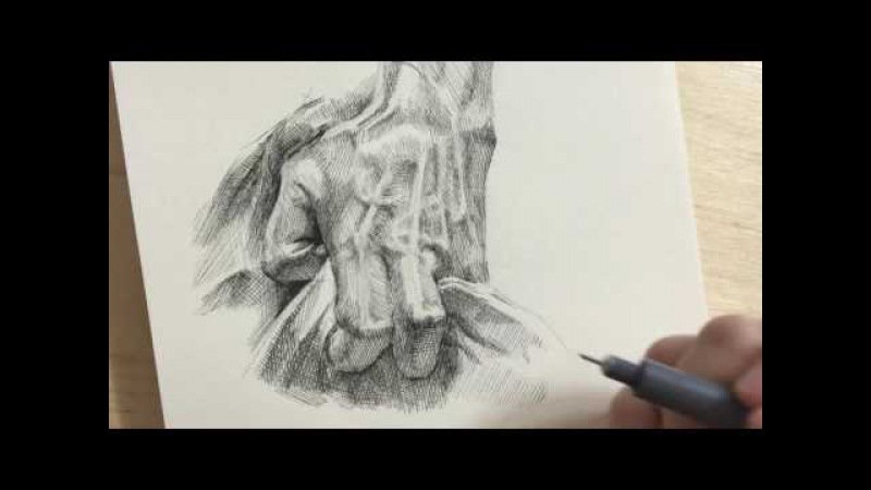 Pen drawing crosshatching hand 2 2