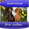 Гостиница для собак. Передержка. Челябинск
