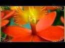 Самые красивые экзотические цветы мира Блюз Релакс