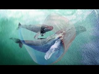 Исчезающая планета. Горбатый кит