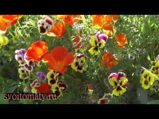 Обзор наших цветников 18 августа 2017