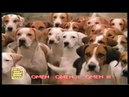 Реклама на VHS Один дома 3 от Премьер Видео Фильм