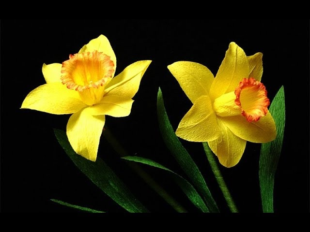 ABC TV How To Make Daffodils Paper Flower From Crepe Paper Craft Tutorial