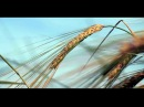 Canon 60D Helios 44 2 58mm F2 0 Zeiss Biotar Copy