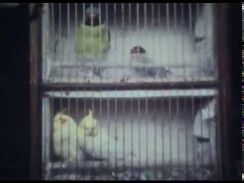 Птичий рынок 1984 год Москва оцифровка кинопленки 8 мм