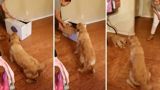 Adorable Moment Dog Unwraps Puppy For Christmas