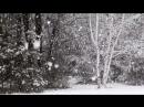 — Когда снег растает, во что он превратится — Разумеется, в воду. — А вот и нет. Он превратится в весну.