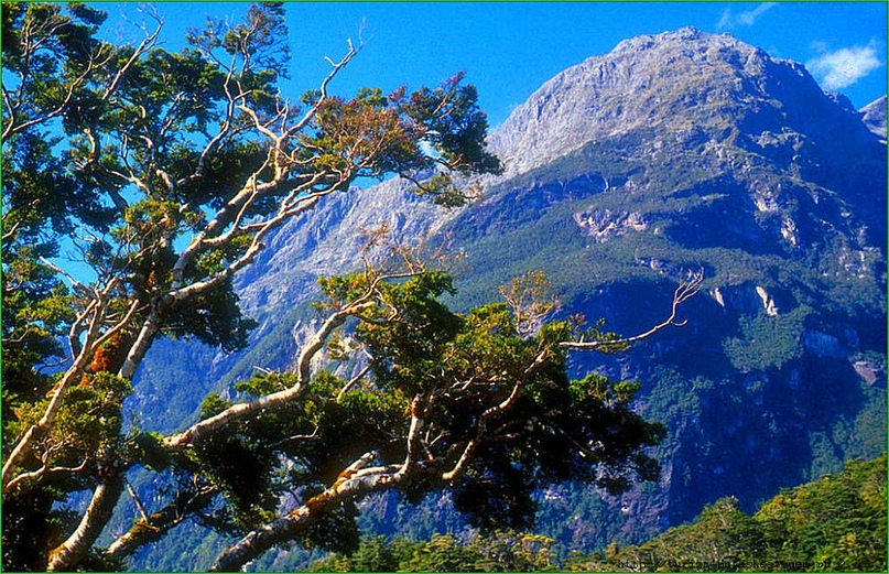 Фьордленд — Новая Зеландия, изображение №5