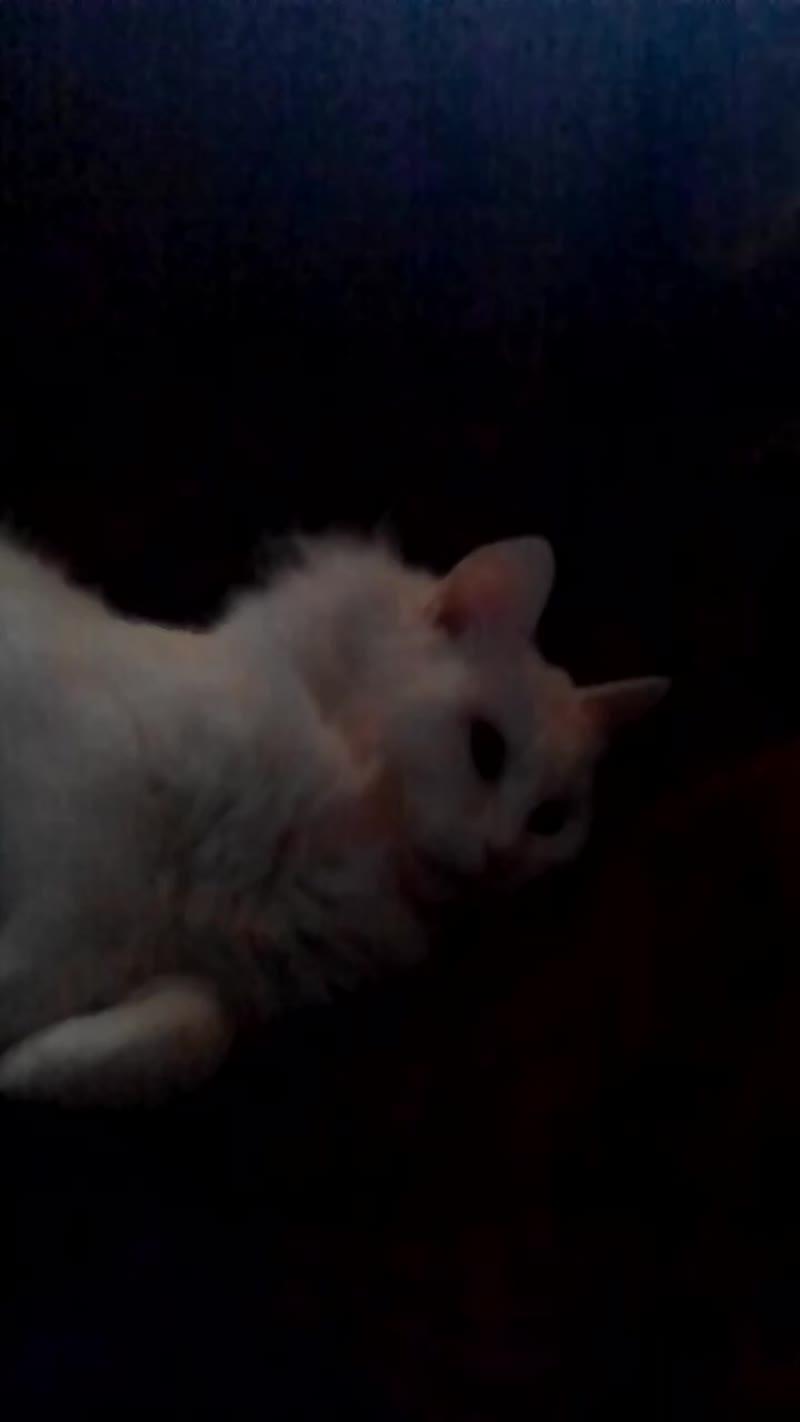 Раскрытие плана моей кошки!