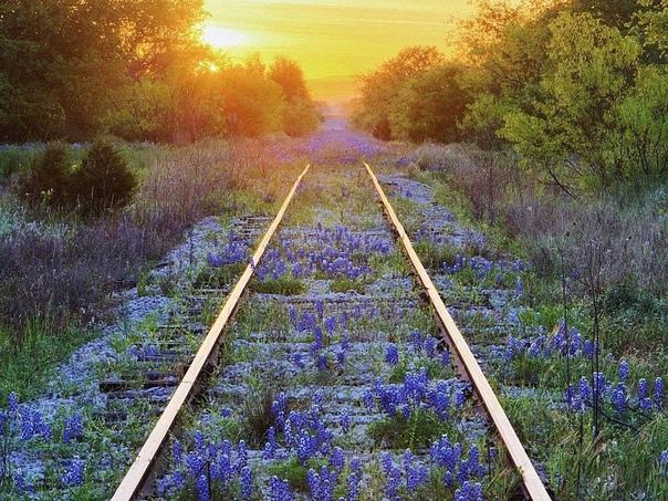 А поезда опять всё едут