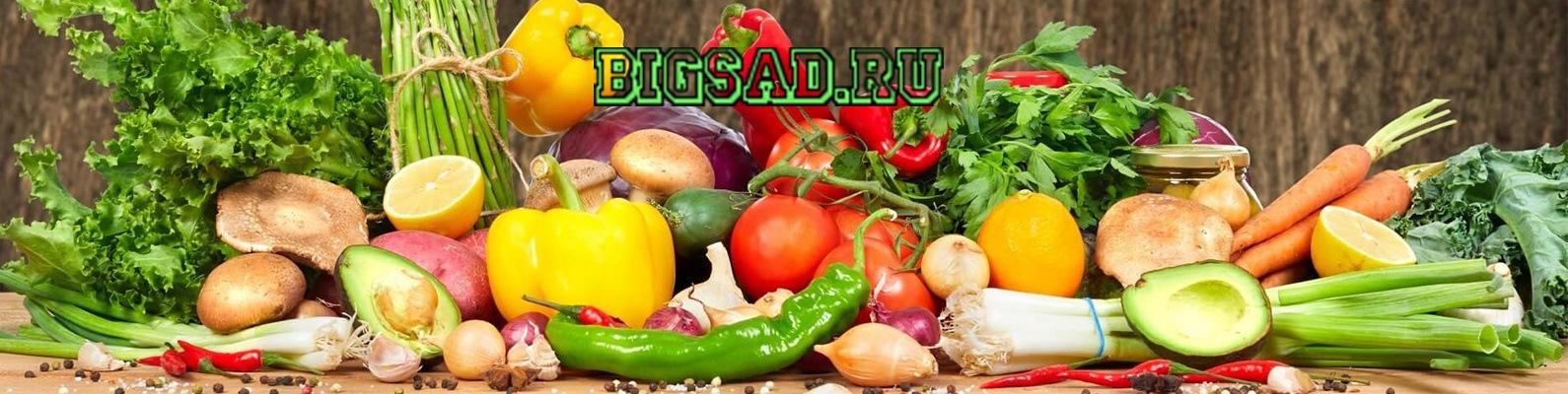 сибирский садовод семена официальный сайт интернет магазин