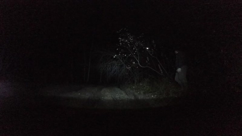 падение дерева.mp4