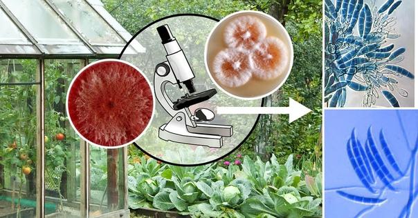 Как правильно применять биопрепараты