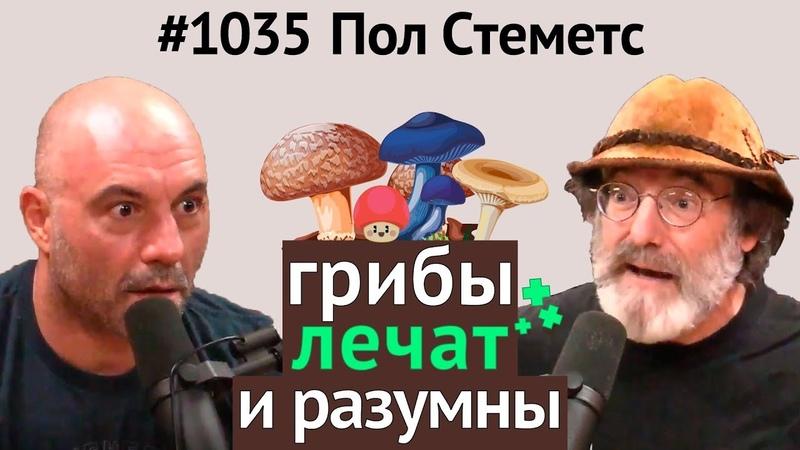 Джо Роган/Пол Стеметс - О пользе грибов, мистических свойствах, разумности, кордицепсе и др.