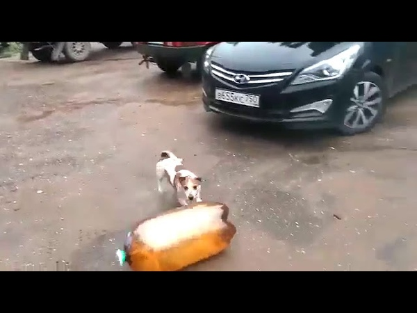 собака бутылка контузия