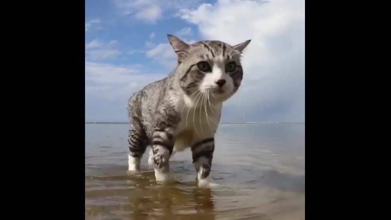 Морской патруль 😼 Мир Кошек