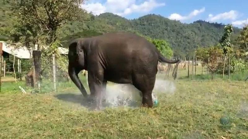 Elephant breaks sprinkler and makes their own fountain