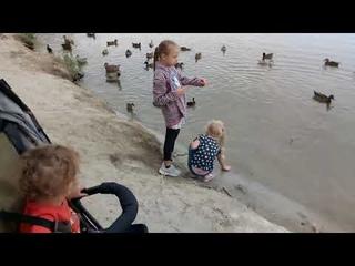 - Уточки) в Волго Донском канале, Пятиморск.