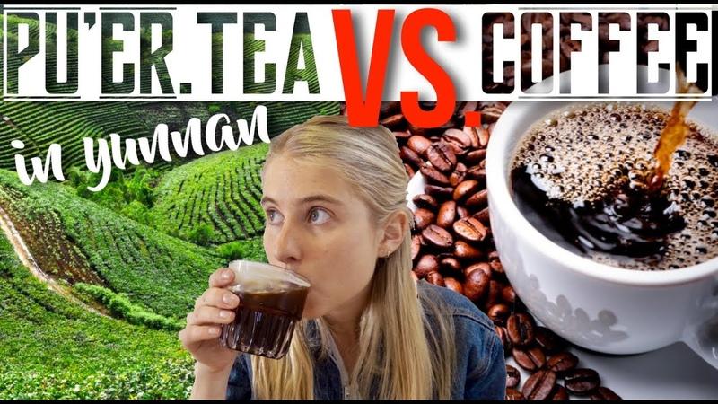 Pu'er Tea VS Coffee WHO WILL WIN