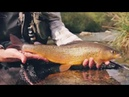 Lavezzinifly Fly Fishing for Graylings in Alto Chiese Trentino Dolomiti Italy ENG