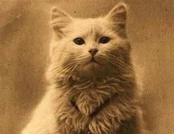 -Вот у всех питомцы, как питомцы, а у меня - ты, - ругалась я на кота. - И чем же я тебя не устраиваю - спросил кот. - Да много чем. Тебе по пунктам - Желательно! - видно было, что кот злится. -