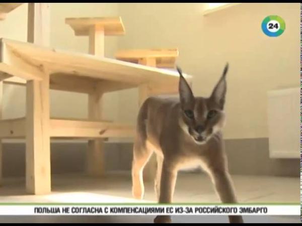 В Москве открыли бутик редких пород кошек