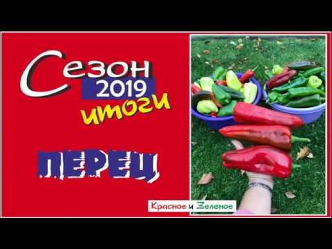 Сладкий и острый перец. Сибирь. Сорта и гибриды. Итог сезона 2019