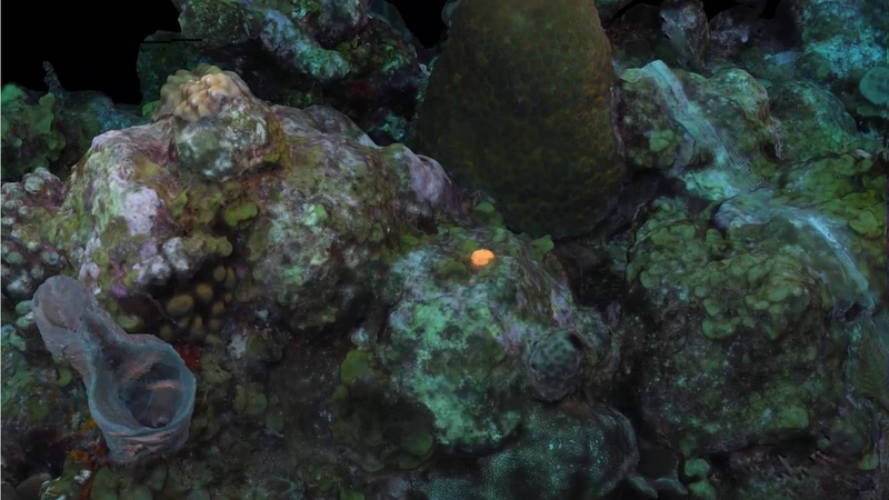 Belize coral photogrammetry 2