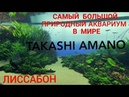 Лиссабонский природный аквариум TAKASHI AMANO. Merlin Altafonte Music Distribution