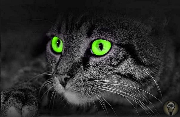 Для чего урчат кошки и 5 других загадок природы и космоса