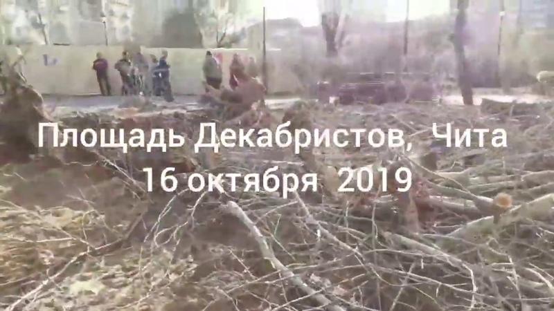 Уничтожение деревьев - это благоустройство по-читински
