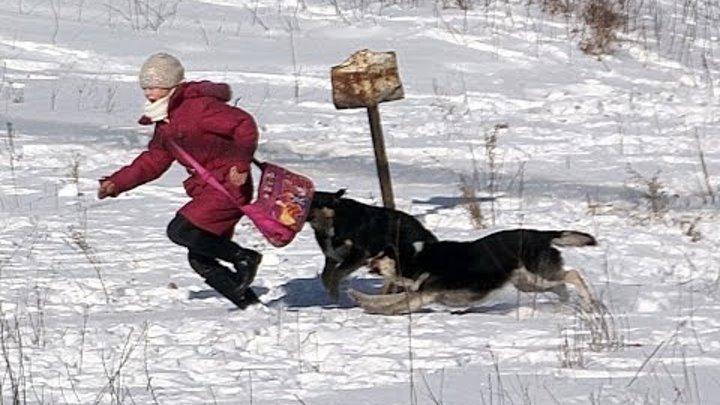Собаки рвут детей видео ответ 6 защитникам бездомным собакам Репост поста если за отстрел собак