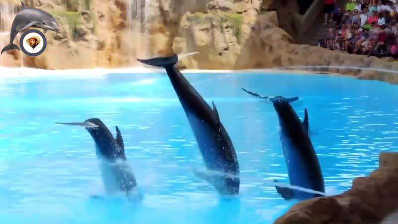 Дельфины Antonio Torres Delfines
