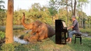 Calm Piano Music Relaxes Restless Bull Elephant