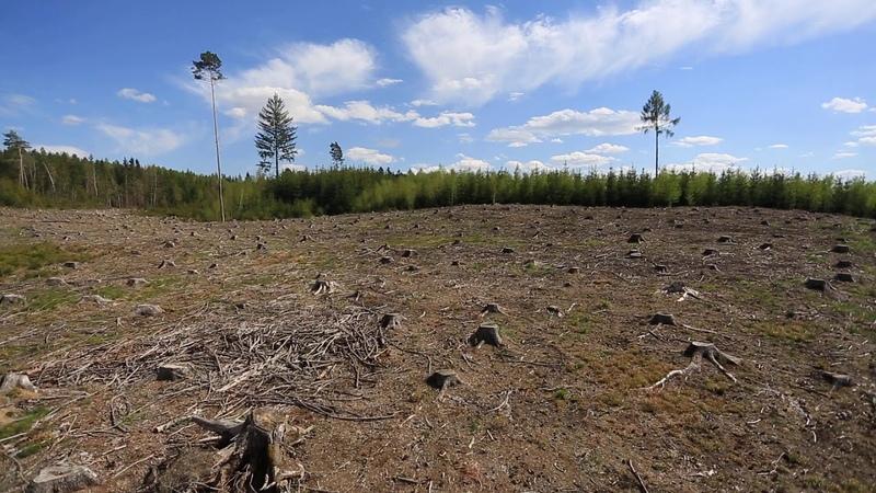 Lesy na Vysočině poničené kůrovcem trápí sucho