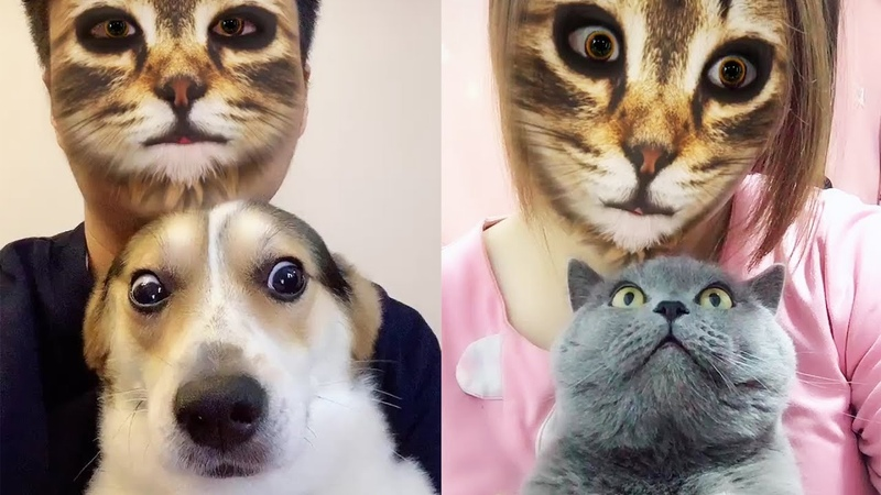 Too Funny Too Cute 😻 Cats And 🐶 Dogs Hilarious Reaction When They See Cat Filter On Owners' Faces