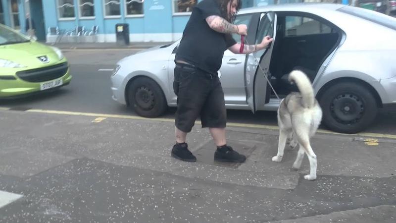 Blazing drunk walking a dog FAIL