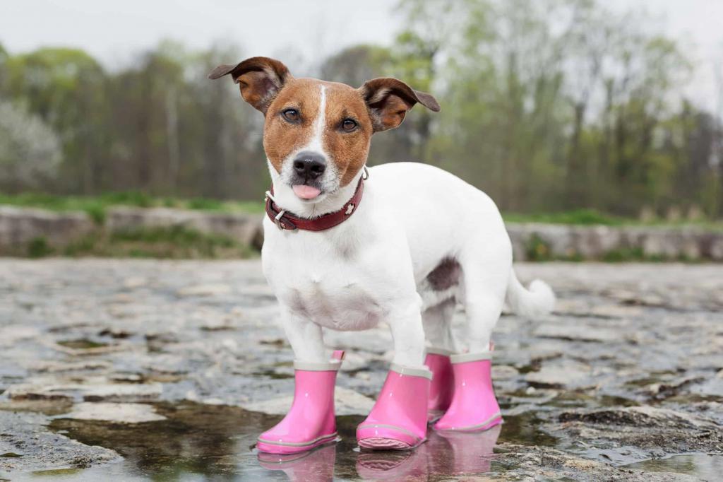 мода собак