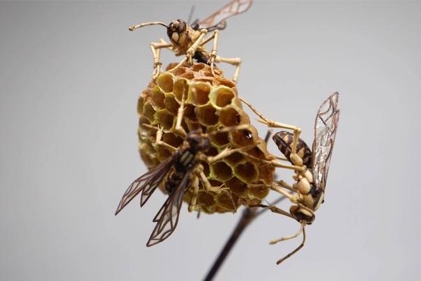 Реалистичные насекомые из бамбука от японского мастера по дереву